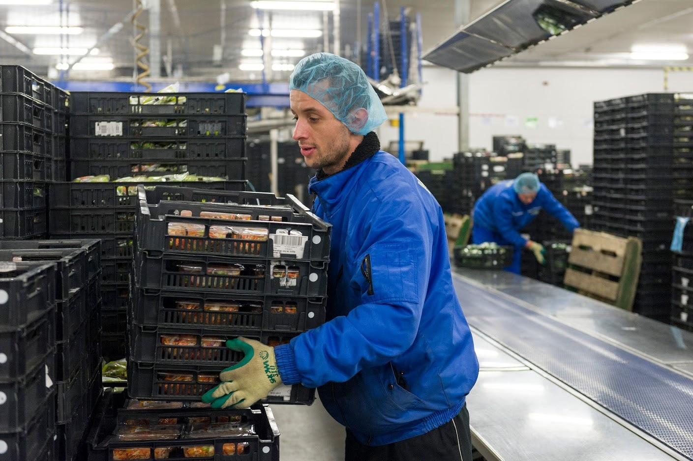 Radnik proizvodne linije